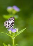 Mariposa en las flores púrpuras Foto de archivo libre de regalías