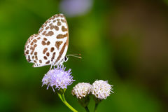 Mariposa en las flores púrpuras Imágenes de archivo libres de regalías