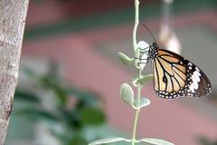 Mariposa en las hojas Imagen de archivo