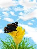 Mariposa en lirio fotos de archivo libres de regalías