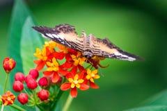 Mariposa en luz del día de la flor imagenes de archivo