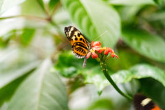 Mariposa en luz del día de la flor imagen de archivo libre de regalías
