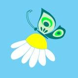 Mariposa en manzanilla Fotografía de archivo libre de regalías