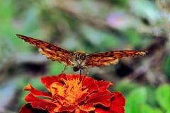 Mariposa en maravilla Fotos de archivo libres de regalías