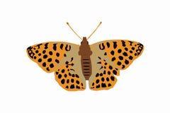 Mariposa en naranja del color stock de ilustración