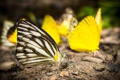 Mariposa en naturaleza Imagenes de archivo