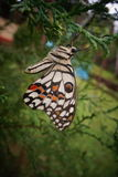 Mariposa en patio trasero Foto de archivo