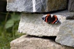 Mariposa en piedra Foto de archivo libre de regalías