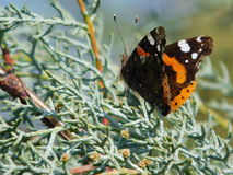Mariposa en rama Imagenes de archivo