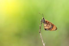 Mariposa en rama secada y hermoso Fotografía de archivo libre de regalías