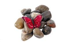 Mariposa en rocas Foto de archivo libre de regalías