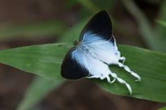 Mariposa en Tailandia Fotografía de archivo