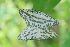 Mariposa en Tailandia Foto de archivo libre de regalías