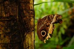 Mariposa en tronco de árbol Fotografía de archivo