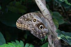 Mariposa en un árbol imagen de archivo