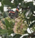 Mariposa en un árbol del flowe Fotos de archivo