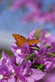 Mariposa en un bougainvillea Foto de archivo libre de regalías