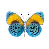Mariposa en un fondo blanco en la alta definición fotografía de archivo