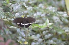 Mariposa en un jardín Foto de archivo libre de regalías