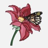 Mariposa en un lirio de la flor Fotografía de archivo