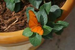 Mariposa en un pote Fotos de archivo