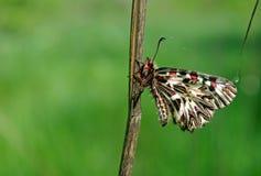 Mariposa en un prado soleado Mariposas de la primavera Adorno meridional Copie los espacios Foto de archivo