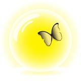 Mariposa en un tazón de fuente de cristal Fotografía de archivo