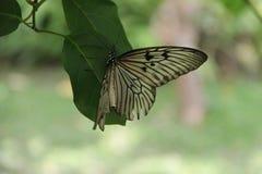 Mariposa en un trozo de papel Imágenes de archivo libres de regalías