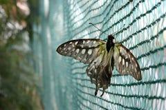 Mariposa en un Web Fotos de archivo