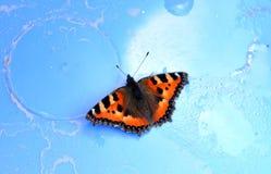 Mariposa en una estera azul Fotografía de archivo libre de regalías