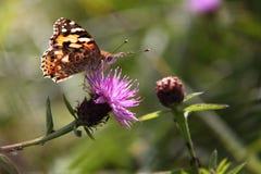 Mariposa en una flor. Foto de archivo libre de regalías