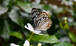 Mariposa en una flor fotos de archivo