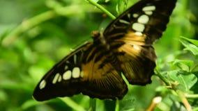 Mariposa en una flor almacen de metraje de vídeo