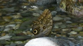 Mariposa en una flor almacen de video