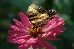 Mariposa en una flor Imagen de archivo