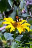 Mariposa en una flor Imágenes de archivo libres de regalías