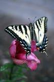 Mariposa en una flor Imagenes de archivo
