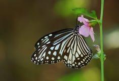Mariposa en una flor Fotografía de archivo libre de regalías