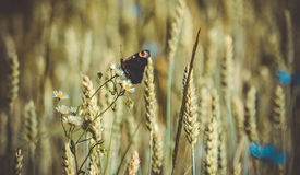 Mariposa en una flor Foto de archivo libre de regalías