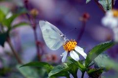 Mariposa en una flor amarilla Foto de archivo