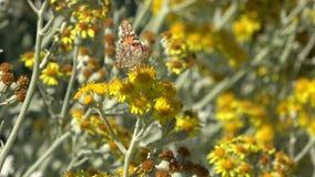 Mariposa en una flor amarilla almacen de metraje de vídeo