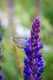 Mariposa en una flor del prado del verano Foto de archivo