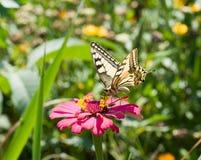 Mariposa en una flor rosada Foto de archivo