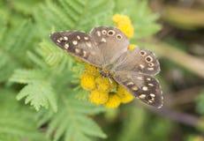 Mariposa en una flor salvaje en el verano imagenes de archivo
