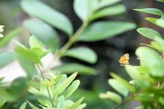 Mariposa en una flor y las hojas Fotos de archivo libres de regalías