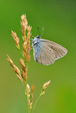 Mariposa en una hierba Imagenes de archivo