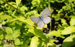 Mariposa en una hoja Fotografía de archivo libre de regalías