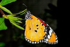 Mariposa en una hoja fotografía de archivo