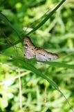 Mariposa en una hoja, isla de Roatan imagenes de archivo