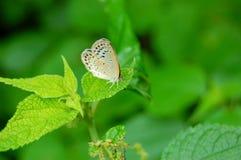 Mariposa en una hoja verde Foto de archivo libre de regalías